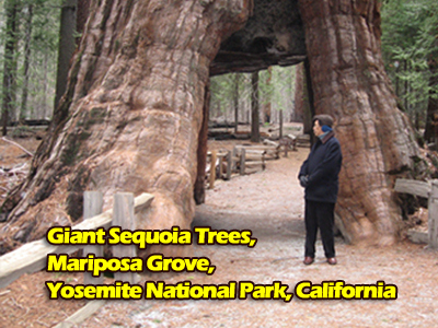 Bro. Eliseo Soriano and the giant-sequoia