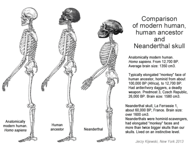 who were the neanderthals essay Were neanderthals the same as modern humans, or were they an entirely different species this is a major topic of debate among anthropologists, and many people.